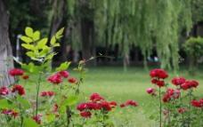 公园景色图片