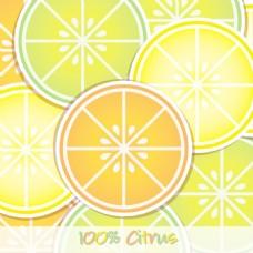 柑橘片背景/卡矢量格式