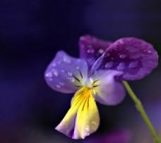 位图 植物摄影 花朵 免费素材