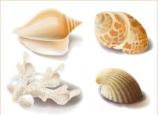 海螺 贝壳 海星 矢图片