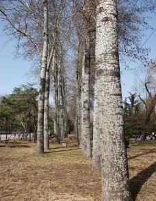 北京日坛公园图片