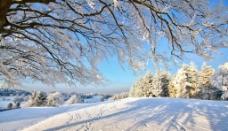 雪地 阳光图片