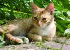 宠物猫嬉戏照片图片