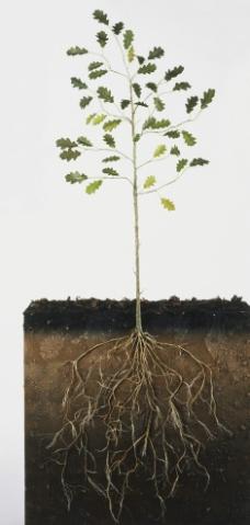 植物 根 土壤图片免费下载,植物 根 土壤设计素材大全