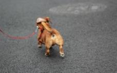 流浪狗图片