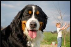 宠物狗图片