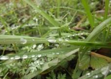 春雨后的气息图片