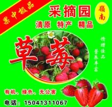 草莓采摘園海報圖片