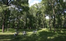 光影森林图片