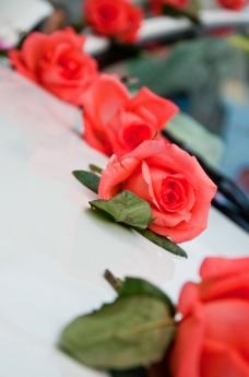 婚礼玫瑰图片