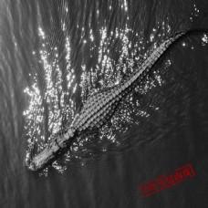 广告设计模板鳄鱼河道模板